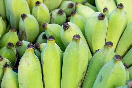 cultivated: cultivated banana in Thailand