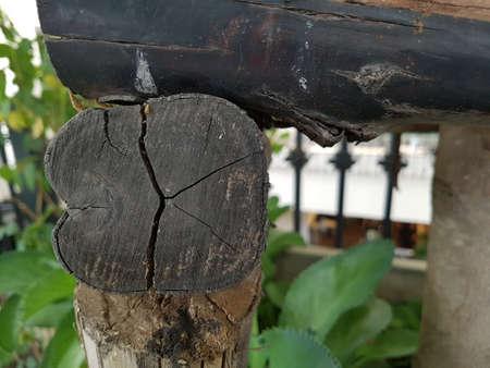 Old rotten tree stump,Autumn mood,tree cut nature is destroyed. Reklamní fotografie