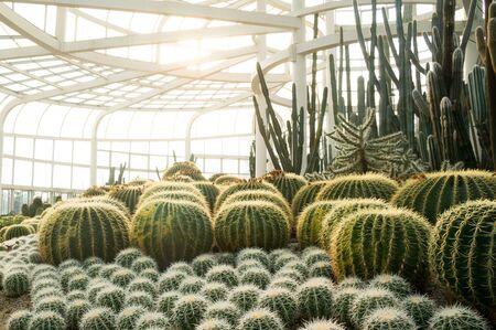 plantas del desierto: Xiamen zona del jard�n bot�nico de plantas del desierto Editorial