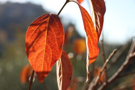tonality: autumn colors