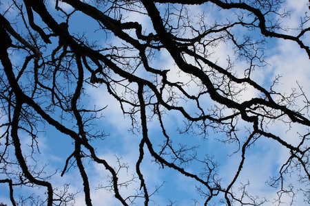 ramification: blue sky and branches
