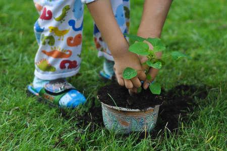 plantando arbol: Padre e hijo plantación de árboles