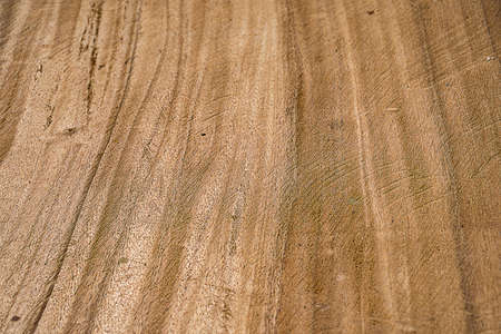 scenery set: Tree timber texture for background.