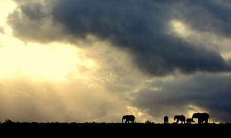 mara: A beautiful African sunset with a herd of elephant  Stock Photo