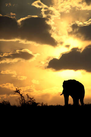 A beautiful African sunset with a herd of elephant  photo