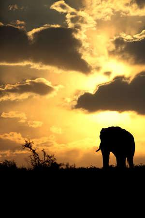 zimbabwe: Una hermosa puesta de sol africano con una manada de elefantes