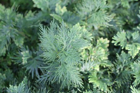 unusual plant Stock fotó - 17291051