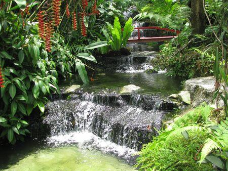 熱帯の滝 写真素材 - 19557801