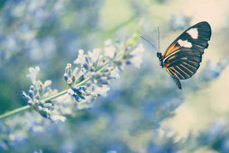 Lavender and the Butterfly photo