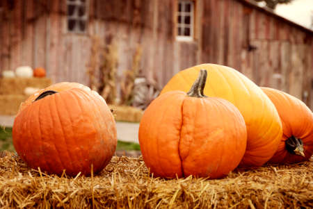 Pumpkins on bale of hay with old wooden barn in the background
