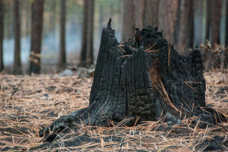 burnt tree trunk with smoke in the distant trees photo