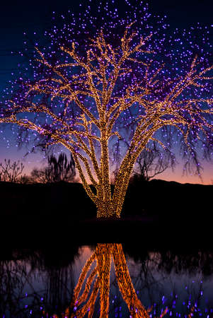 seasonal light display: Tree decorated with holiday lights at night with reflection