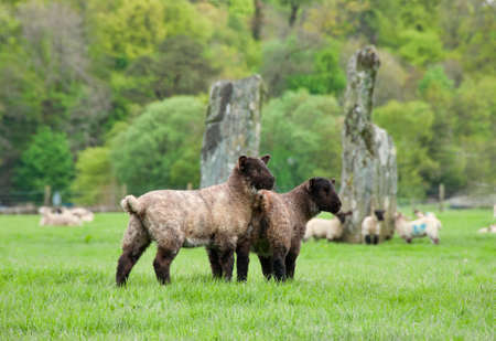 nether: Pair of Baby Sheep with Ancient Monoliths of Nether Largie  Stock Photo