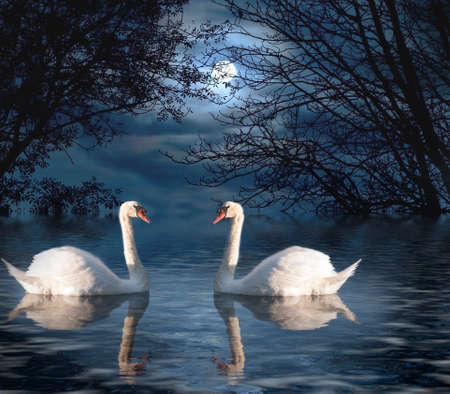 photomanipulation: Two White Swans out for a Moonlight Swim
