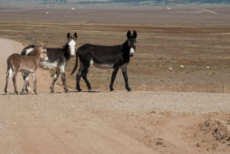 Donkey Family Walking on a Country Road