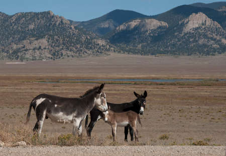 Donkey family standing in a valley with mountains in the distance