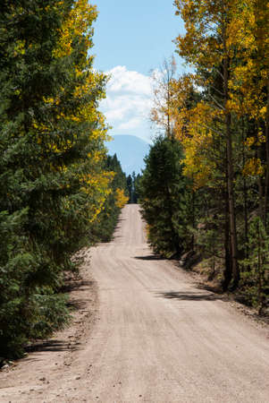 Vertical image of dirt mountain road lined with pine trees and aspen trees in the fall