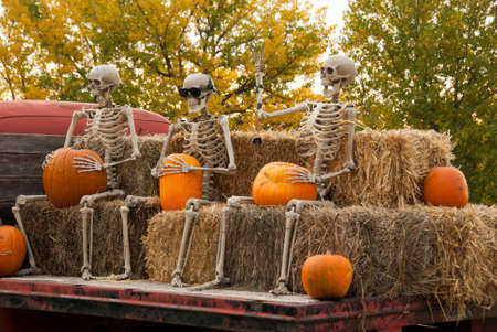 Three skeletons sitting on bales of hay holding a pumpkin on the back of an old farm truck