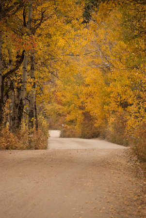 Autumn Drive Through The Aspens at Rocky Mountain National Park in Colorado photo