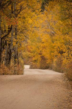 Autumn Drive Through The Aspens at Rocky Mountain National Park in Colorado