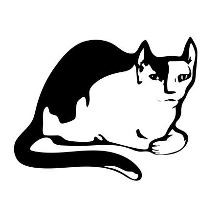 White and black silhouette of a cat on white background. Vector isolated.