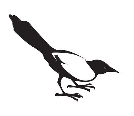 Magpie. Black decorative silhouette on white background. Vector isolated.