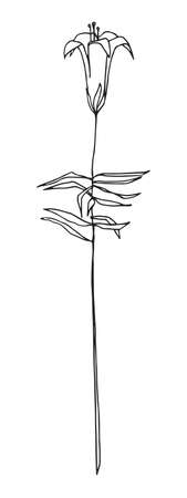 Vector image. Outline harebell flower. Line illustration of bluebell or campanula. Sketch style.