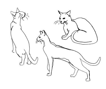 silueta de gato: Vector set of cute cats. Black silhouettes on white background. Doodle or sketch style image.