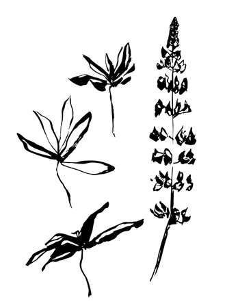 Vector black hand drawn flower and leaves of lupine. Stylized print painted by ink. Usable as print or mask.