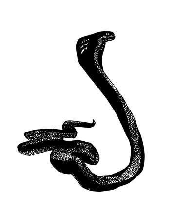 Reptile snake or serpent. Black vector isolated on white background. Hand drawn stylized illustration.