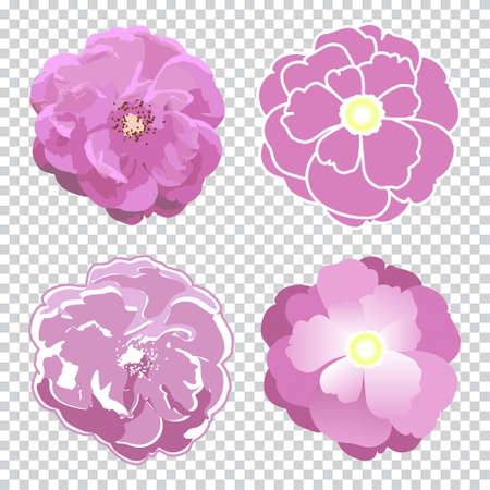 Colorful rose flower created in four technics. Vector realistic and stylized decorative illustration. Isolated on transparent background.