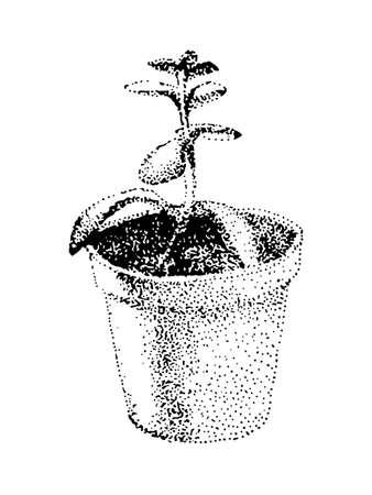 Hand drawn crassula vector image. House plant in a pot. Black illustration on white background. Pointillism technic. Illustration