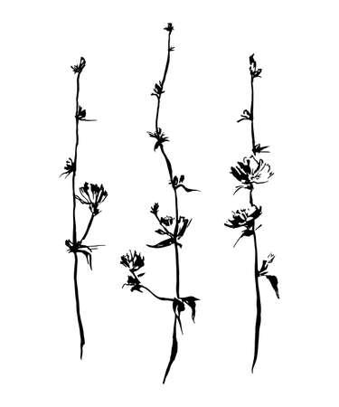 Set of hand drawn brush paint chicory. Vector succory flowers. Monochrome image. Black isolated on white background.