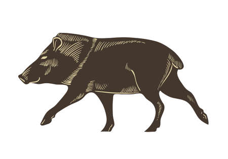 Collared peccary vector. Wild boar sketch illustration isolated on white background. Иллюстрация