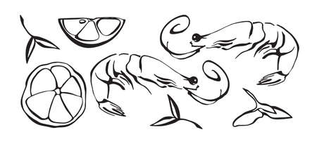 Hand drawn vector illustration of shrimp as seafood. Prawn with lemon and herbs. Black isolated on white background.