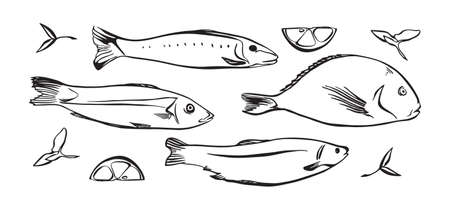 Hand drawn vector illustration of seafood. Fish with lemon and herbs. Black isolated on white background.