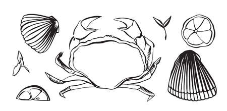 Hand drawn vector illustration of crab as seafood. Shellfish with lemon and herbs. Black isolated on white background.