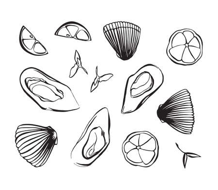 Hand drawn vector illustration of clam as seafood. Shellfish with lemon and herbs. Black isolated on white background.