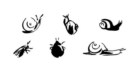 Snails and beetles set. Vector brush ink painting animal illustration. Black isolated vector on white background.