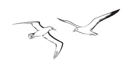 Albatross and sea mew flying. Hand drawn sketch bird. Vector black ink drawing illustration isolated on white background. Ilustração