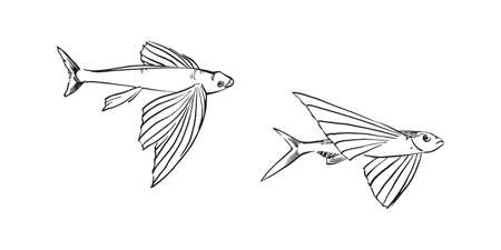 Flying fish. Hand drawn sketch illustration. Vector black ink drawing isolated on white background. Vecteurs
