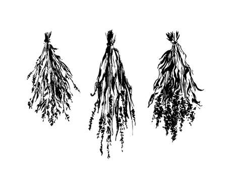 Hand drawn dried flower bunches sketch illustration. Vector black ink drawing isolated on white background. Grunge style.