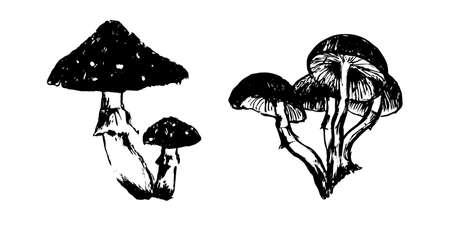 Illustration de croquis de champignons vénéneux dessinés à la main. Dessin vectoriel à l'encre noire isolé sur fond blanc. Style grunge.