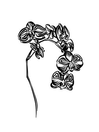 Hand drawn orchid flower outline sketch. Vector black ink drawing isolated on white background. Graphic illustration.