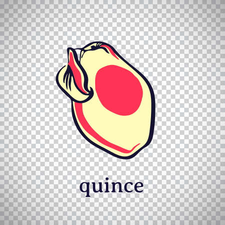 Hand drawn stylized quince. Vector fruit isolated on transparent background. Graphic illustration for logo or icon.