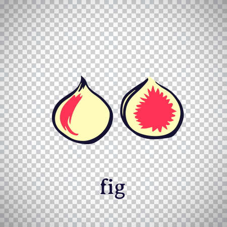 Hand drawn stylized fig. Vector fruit isolated on transparent background. Graphic illustration for logo or icon.