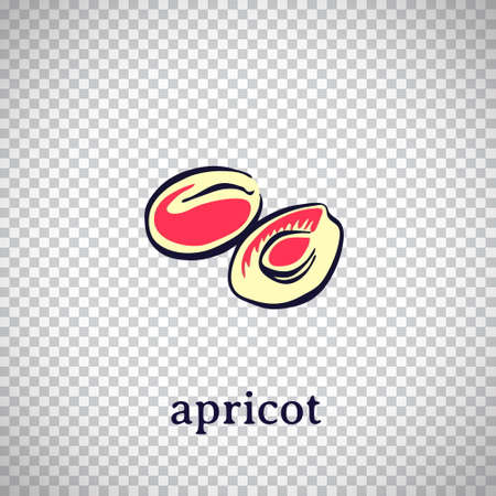 Hand drawn stylized apricot. Vector fruit isolated on transparent background. Graphic illustration for logo or icon.
