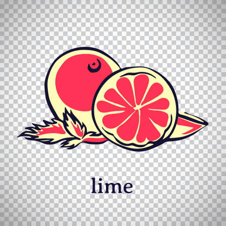 Hand drawn stylized lime. Vector citrus fruit isolated on transparent background. Graphic illustration for logo or icon.