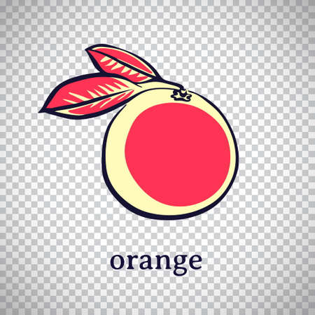 Hand drawn stylized orange. Vector citrus fruit isolated on transparent background. Graphic illustration for logo or icon.
