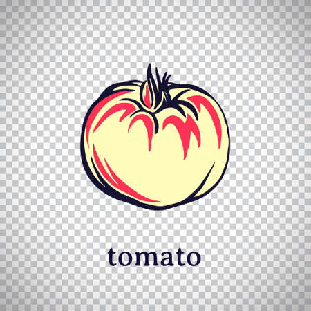 Hand drawn stylized tomato. Vector isolated on transparent background. Graphic illustration for logo or icon. 일러스트